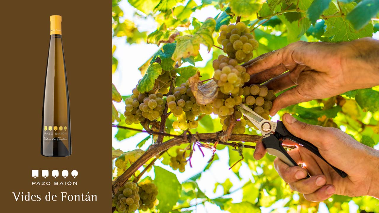 Vides de Fontan is an albariño with 3 years of aging